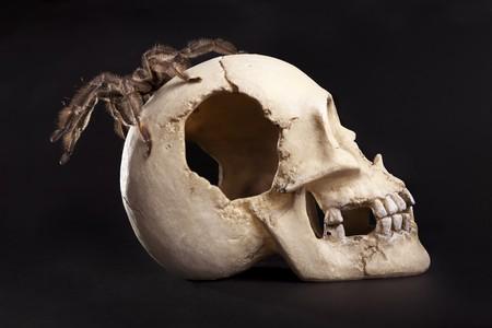 beautiful spider on the skull Stock Photo - 11245155