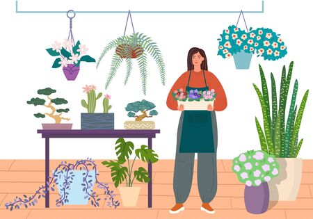 Florist caring for indoor plants, flower shop vector illustration. Young woman in a flower center is holding a pot of violets. flowers, succulents, bonsai in houseplant store.