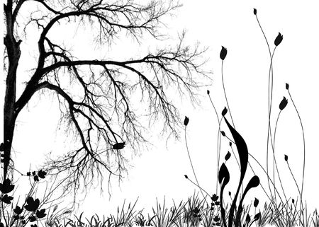 black and white flowers an trees