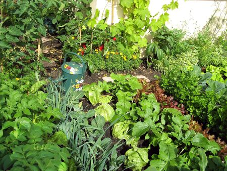 Organic growing  veg Banco de Imagens