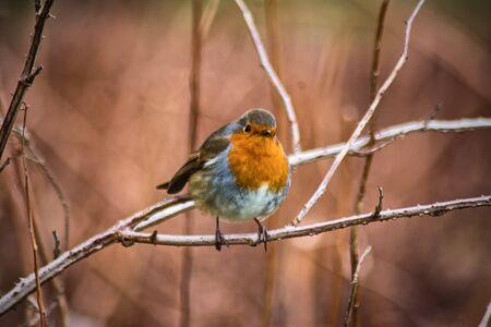 Scotland birds and wildlife