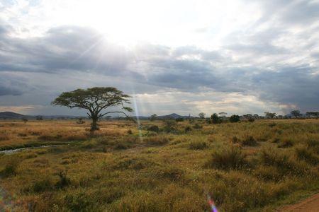 adansonia: African Safari Stock Photo