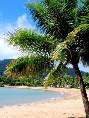 airlie: Airlie beach palm tree Stock Photo