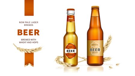 Wheat craft beer. Golden beer, refreshing alcoholic drink brewed from wheat and hops in glass bottle and lying spikelets on white glossy background, ads promotional banner.