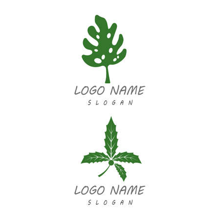 Monstera leaf logo vector design