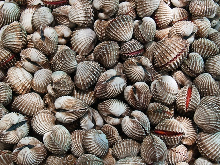 cockle: A background of fresh cockles for sale at a market