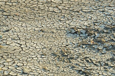 robust: Steppe cracked clay earth in the summer