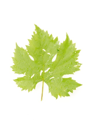 Grape leaves photo