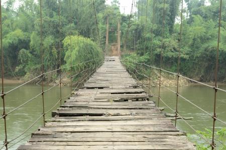 bridge in the forest: Rope bridge