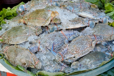 blue swimmer crab: Fresh raw flower crab or blue crab in seafood  market Stock Photo