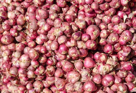 shallot: red onion,  red shallot Stock Photo