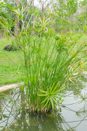 reeds in the water Stock Photo