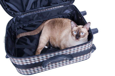 market bottom: cat sitting in a suitcase Stock Photo