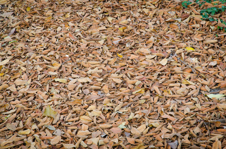 dead leaves: dry dead leaves background Stock Photo