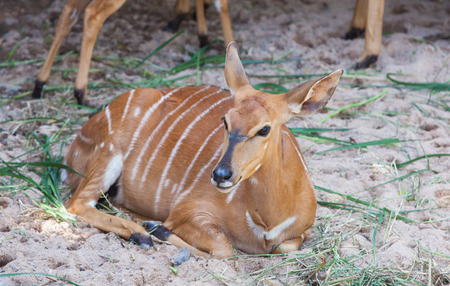 spotted: Spotted deer sitting Stock Photo