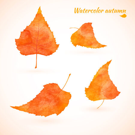 Orange yellow watercolor birch leaves. Set. Vertor Vector