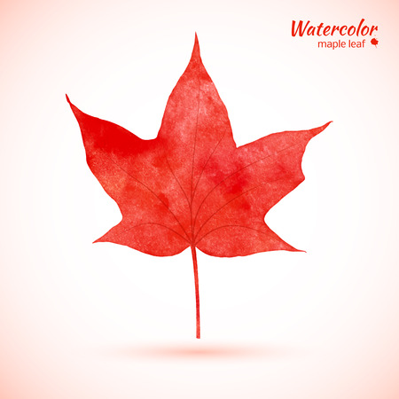 Watercolor card with red maple leaf. Vector illustration.