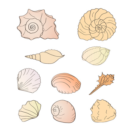 pastiche: Vector illustration - set of shells, drawn by hand, a simple pastiche. Isolated on white background. Illustration