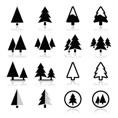 arbol de pino: Iconos del vector del �rbol de pino establecen