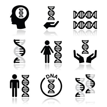 Menselijk DNA, genetica vector pictogrammen instellen Stock Illustratie