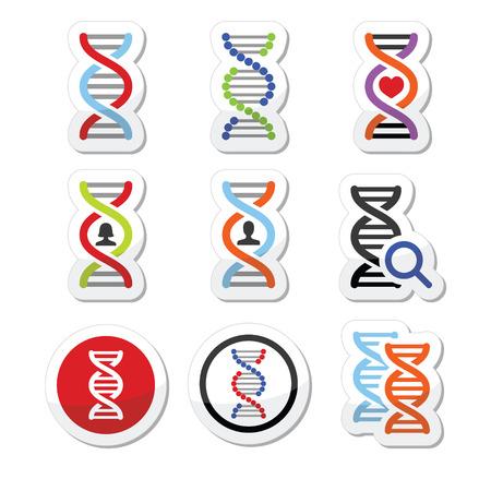 genetica: DNA, impostare le icone vettoriali genetica Vettoriali