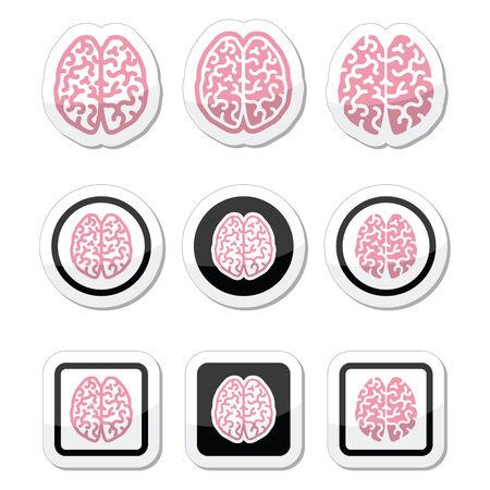 cerebra: Human brain icons set - intelligence, creativity concept Illustration
