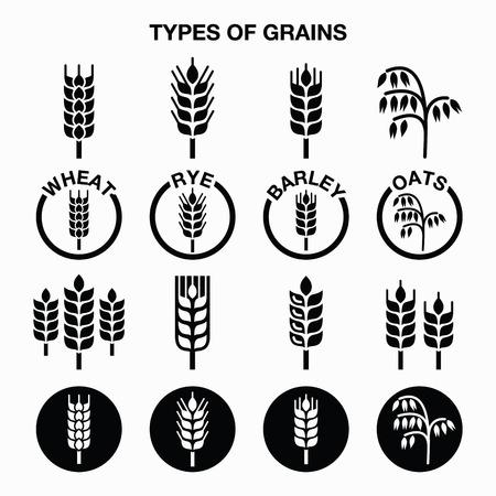 pain: Types de grains, céréales icônes - blé, seigle, orge, avoine Illustration