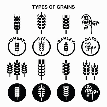 Types of grains, cereals icons - wheat, rye, barley, oats Çizim