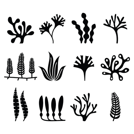 macroscopic: Seaweed icons set - nature, food trends concept