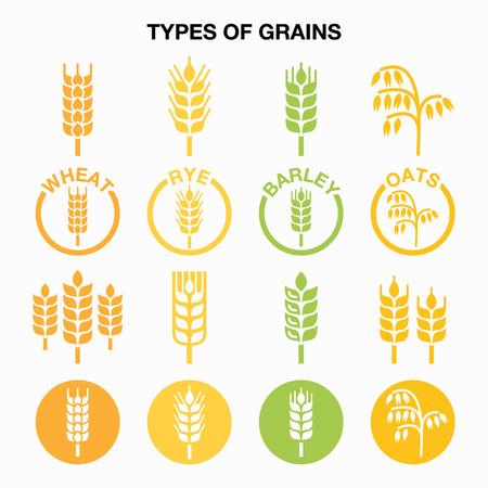 cosecha de trigo: Tipos de granos, cereales iconos - el trigo, el centeno, la cebada, la avena Vectores