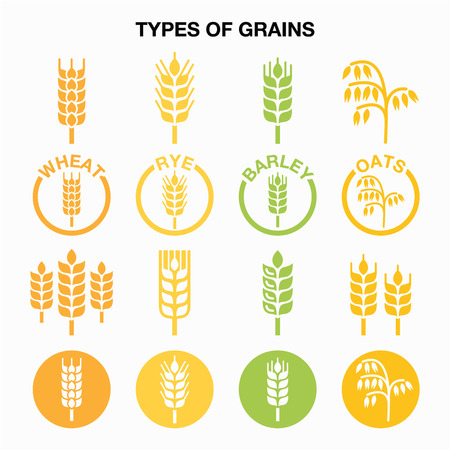 grains: Types of grains, cereals icons - wheat, rye, barley, oats Illustration