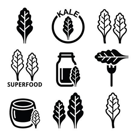 kale: Superfood - kale leaves vector icons set Illustration