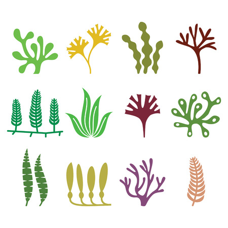agar: Seaweed icons set - nature, food trends concept