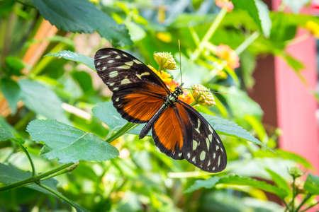 Mariposa en la flor Foto de archivo - 35663004