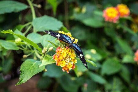 Mariposa magnífica de la flor en la naturaleza real Foto de archivo - 35663024