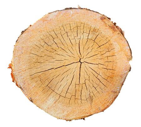 Baum im Schnitt auf weißem Hintergrund