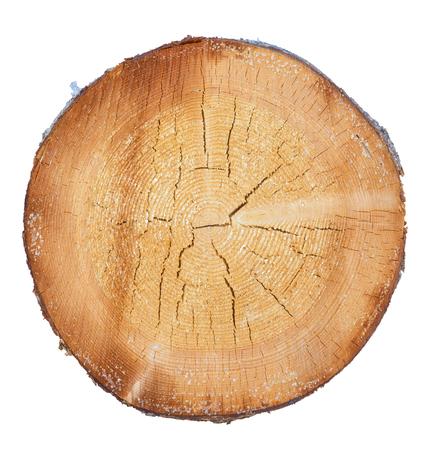 árbol en un corte sobre un fondo blanco Foto de archivo
