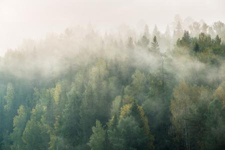 misty dawn in the national park deer streams
