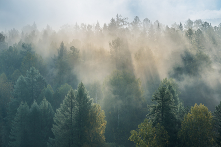 alba nebbiosa nei ruscelli dei cervi del parco nazionale
