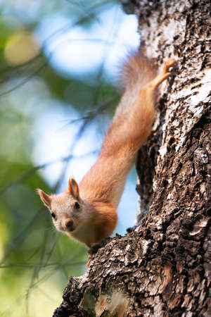 curious squirrel on a tree in its natural habitat Banco de Imagens