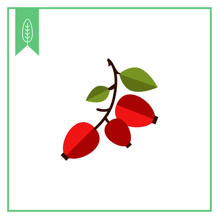 hagebutten: Vector icon of ripe dogrose berry bunch