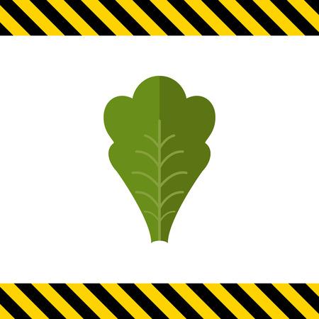 leaf lettuce: Multicolored vector icon of green fresh lettuce leaf Illustration