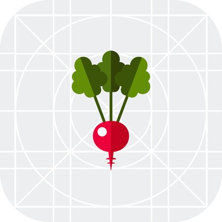 root crop: Multicolored vector icon of radish with green leaves