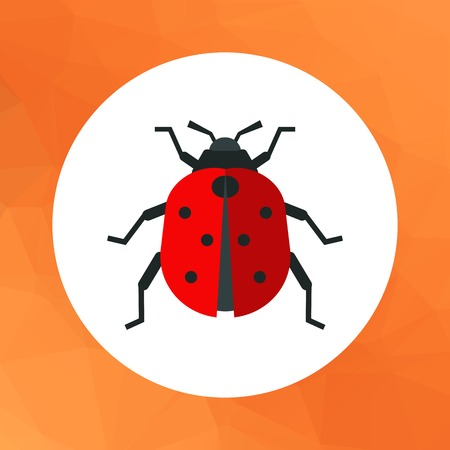 feeler: Multicolored vector icon of ladybird, top view