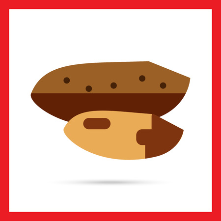 brazil nut: Multicolored vector icon of Brazil nut with nutshell