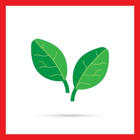 spinach: Vector icon of two green spinach leaves