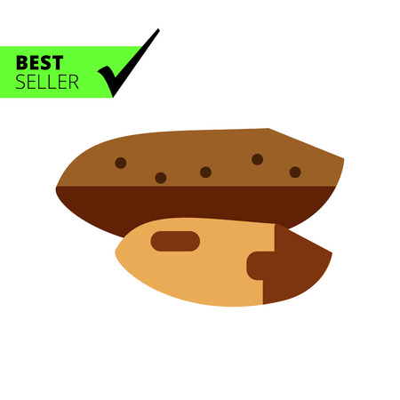 nutshell: Multicolored vector icon of Brazil nut with nutshell