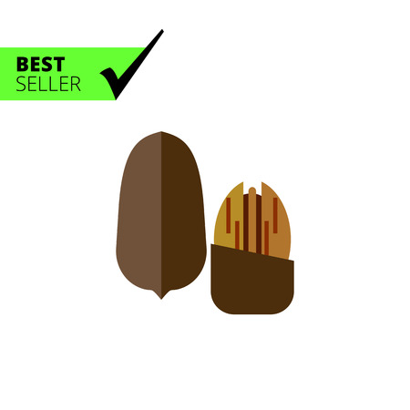 nutshell: Multicolored vector icon of one whole pecan nut and one without nutshell