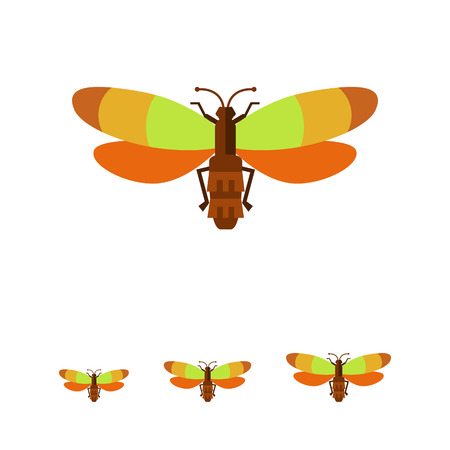 feeler: Vector icon of beetle with multicolored wings, top view Illustration
