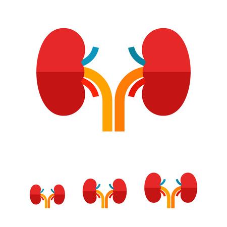 urology: Multicolored vector icon of kidneys, human internal organs